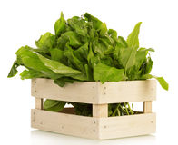 Useful herbs in crate. Isolated on white Royalty Free Stock Photo