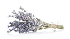 Useful herbs: dry branch of lavender stock images