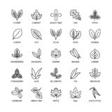 Useful leaves linear icons vegan analysis vector set of design elements leaf tree bush berry healthy food vector symbol vector illustration