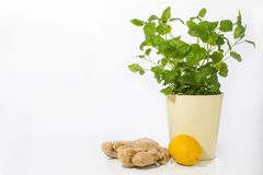 Health health food useful plant  in our house. Useful plants in our house Mint, lemon and ginger all you need in cold days to protect against colds Stock Image