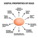 Useful properties of chicken eggs. Infographics. Vector illustration on isolated background. Useful properties of chicken eggs. Infographics. Vector Royalty Free Stock Photo