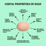 Useful properties of chicken eggs. Infographics. Vector illustration. Useful properties of chicken eggs. Infographics. Vector illustration Stock Photography