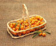Useful sea-buckthorn berries in basket Royalty Free Stock Image