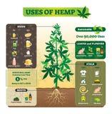 Uses of hemp vector illustration. Seeds, leaf, flower, root and stalk use. Uses of hemp vector illustration. Seeds, leaf, flower, root and stalk use for cooking stock illustration
