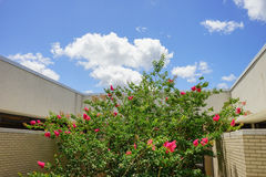 USF campus landscape: library Stock Image
