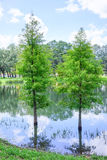 USF campus landscape: tree in water Stock Photos