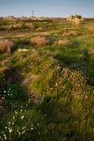 Ushant island meadow landscape Stock Photography