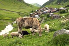 Ushguli by av Svaneti i Georgia arkivbilder