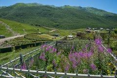 Ushguli in Georgia Royalty Free Stock Image