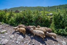 Ushguli in Georgia. Chvibiani - one of four villages community called Ushguli in Upper Svanetia region, Georgia Stock Image