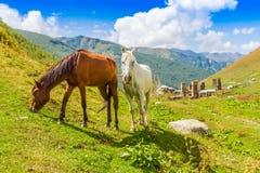 Ushguli, Hogere Svaneti, Georgië, Europa Stock Foto