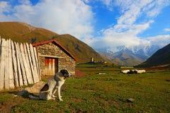 Ushguli Svaneti geórgia O cão e a montanha O montanhoso fotos de stock royalty free