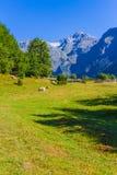 Ushguli, Upper Svaneti, Georgia, Europe Royalty Free Stock Images