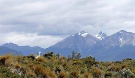 ushuaia Royaltyfri Foto