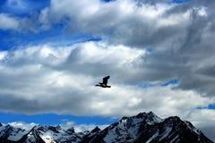 Ushuaia - Beagle Channel Stock Photo