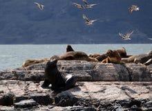 Ushuaia krajobraz Obrazy Royalty Free