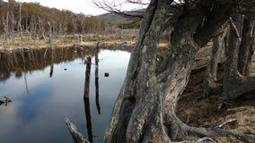 Ushuaia - Parque Nacional Royalty-vrije Stock Foto's