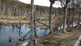 Ushuaia - Parque Nacional Stock Photo