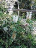 Usine avec la fleur blanche photographie stock