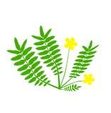 Usine avec la fleur jaune illustration de vecteur