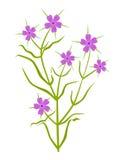 Usine avec la fleur violette illustration de vecteur