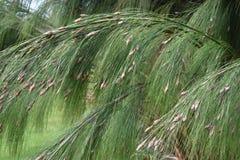Usine colorée d'herbe verte dans le jardin botanique à Cape Town en Afrique du Sud Photos stock