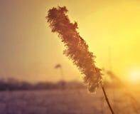 Usine congelée à la fin de coucher du soleil  photo stock