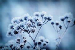 Usine congelée de pré Photographie stock libre de droits