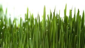 Usine croissante 4k d'herbe verte clips vidéos
