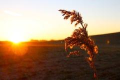 Usine défraîchie dans le lever de soleil Photographie stock