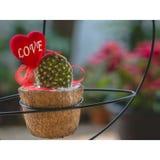 Usine d'amour de valentines Photographie stock libre de droits