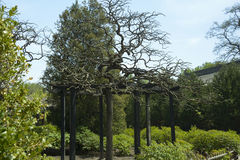 Usine d'arbre de jardin Photographie stock libre de droits