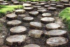 Usine d'arbre de tronçon sur le jardin Photo libre de droits