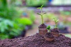 Usine d'argent croissante sur des finances et l'investissement Concep d'affaires de pièces de monnaie images libres de droits