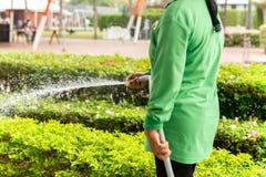 Usine d'arrosage de femme de jardinier avec le tuyau dans le jardin photographie stock libre de droits