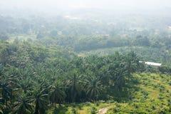 Usine d'huile de palme photo libre de droits