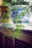 Usine d'intérieur de spirale de vert vif Image libre de droits