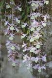 Usine d'orchidée Photos stock