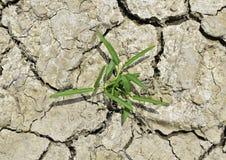 Usine dans la boue criquée sèche image stock