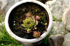 Usine dans le pot Photos stock