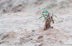 Usine dans le sable photo libre de droits