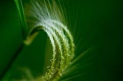 Usine de branche dans l'herbe Photo libre de droits