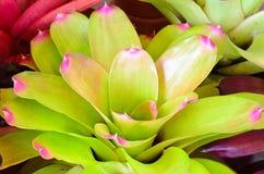 Usine de bromélia Image stock