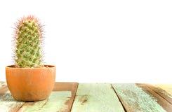 Usine de cactus Photographie stock