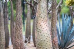 Usine de cactus Photos stock