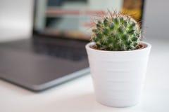 Usine de cactus dans un pot blanc avec l'ordinateur portable/ordinateur portable modernes photo libre de droits