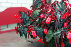 Usine de cigare ou cigare mexicain Photo stock