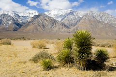 Usine de désert avec des montagnes   photographie stock