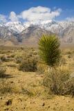 Usine de désert avec des moutntains à l'arrière-plan photo stock