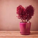 Usine de forme de coeur sur la table en bois Concept du jour de Valentine Images libres de droits